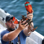 PRECIOUS CARGO: A dealer at Cape Porpoise holds a 3½-pound lobster in Kennebunkport, Maine, on Aug. 24. Members of the U.S. lobster industry are hopeful a thaw in trade relations with China could reopen one of the biggest markets in the world. / AP FILE PHOTO/ROBERT F. BUKATY