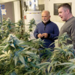 HIGH COST: John Rogue, left, co-owner and chief financial officer, converses with Chris Roy, chief operating officer, at Medici Products and Solutions, a medical marijuana cultivator in Warwick. In 2018, $100,000 worth of product was stolen from their site and their insurance did not cover the loss. / PBN PHOTO/MICHAEL SALERNO