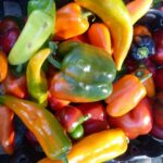 THE DEM has made $150,000 available in the form of farm viability grants. Above are Rhode Island grown peppers. / COURTESY R.I. DEPARTMENT OF ENVIRONMENTAL MANAGEMENT