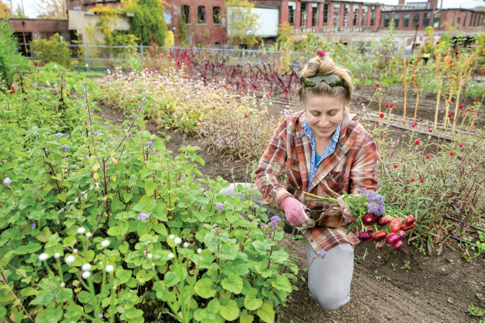 ALL GROWN UP: Krystal Kraczkowski, a grower at What Cheer Flower Farm in Providence, gathers fresh flowers from the nonprofit's garden. /PBN PHOTO/TRACY JENKINS