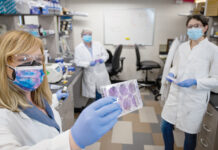 PRODUCT TEST: Amanda Jamieson, left, assistant professor of molecular microbiology and immunology at Brown University, holds plaque assays of GC Ink, a graphene ink developed by Graphene Composites USA Inc. that is believed to kill viruses when applied to surfaces. Brown researchers, including Delia Demers, center, and Meredith Crane, are testing the product thanks to a grant GC received from the R.I. Commerce Corp.'s Innovation Voucher Program. / COURTESY GREG SERPA