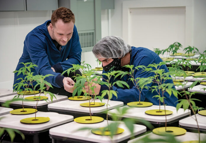LOTS OF GREEN: Spencer Blier, left, CEO and founder of Mammoth Inc. in Warwick, one of the state's licensed cannabis cultivators, in his facility with Lucas Molak, plant operations and solventless ice water technician. Mammoth generates $100,000 to $120,000 in cannabis sales per month. / PBN PHOTO/MICHAEL SALERNO