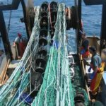 THE ELIMINATOR trawl system, developed by URI researchers working with local fishermen, takes advantage of behavioral differences between haddock and other fish. /
