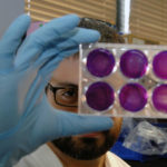 A NEW VISION: EpiVax has pioneered the use of immune-informatics in the field of vaccine development. Here, research associate Ryan Tassone checks the efficacy of a vaccine on a group of cell cultures at the company's Knowledge District lab. / PBN PHOTO/BRIAN MCDONALD