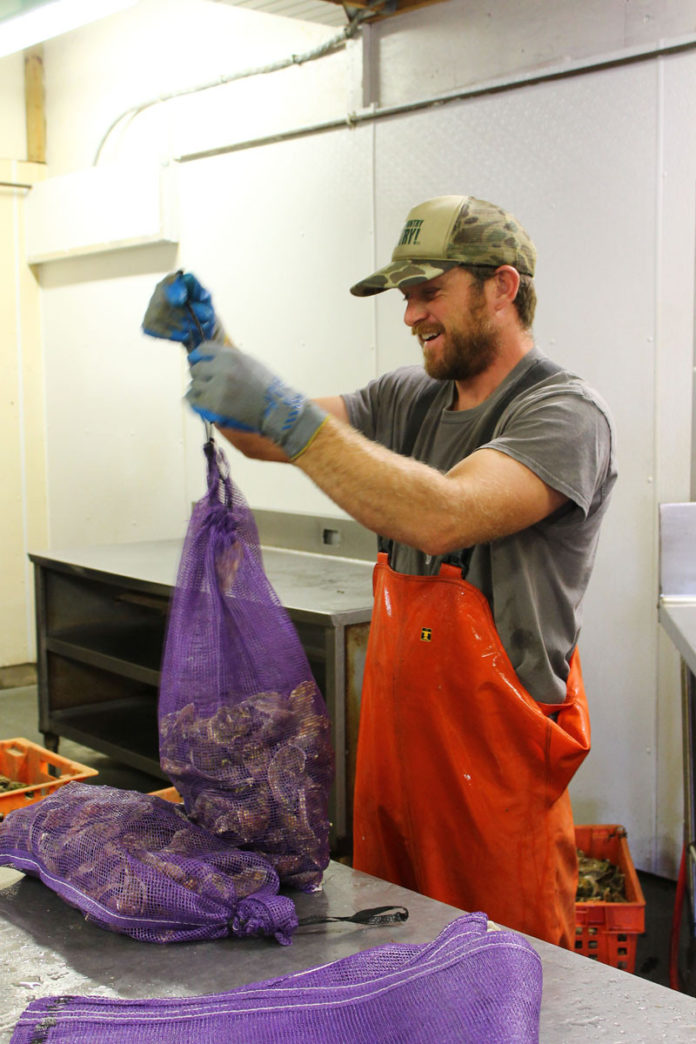 HOMEGROWN: Oyster farmer Nick Papa packs his oysters at the Ocean State Shellfish Cooperative. Papa's oysters are grown on his farm in Ninigret Pond in Charlestown. / PBN PHOTO/JOHN LEE