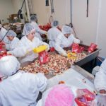 GOOD CATCH: Workers pack bags of Jonah crabs for shipment at Rome Packing in East Providence. Jonah crab is fetching about 85 cents per pound, an improvement over 50 cents per pound five years ago. / PBN PHOTO/MICHAEL SALERNO