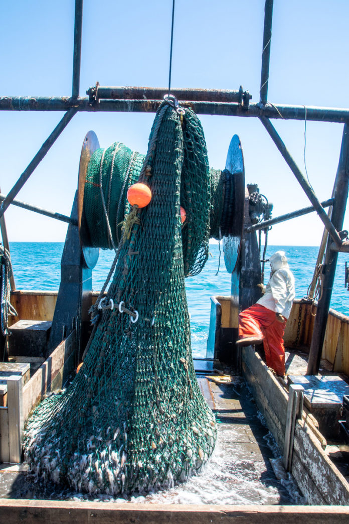 "FRESH CATCH: Off Nantucket, the Point Judith boat Lena Pearl's squid net comes up the stern as deckhand Chris Gillis hustles to ""trip it open"" and get the net back in the water quickly. / PBN PHOTO/JOHN LEE"