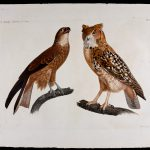 PROVIDENCE ATHENAEUM announces the purchase of three plates depicting species of birds from the 19th century Description de l'Egypte collection to replace 14 stolen during the early 20th century. The acquisition was made using funds from a recent anonymous gift. / COURTESY PROVIDENCE ATHENAEUM