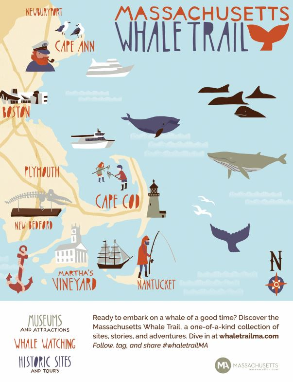 THE MASSACHUSETTS OFFICE OF TRAVEL and Tourism announced the launch of the Massachusetts Whale Trail, a tourism-destination collaboration that connects and promotes whale-related activities, destinations and businesses in the Bay State. / COURTESY MASSACHUSETTS OFFICE OF TRAVEL AND TOURISM