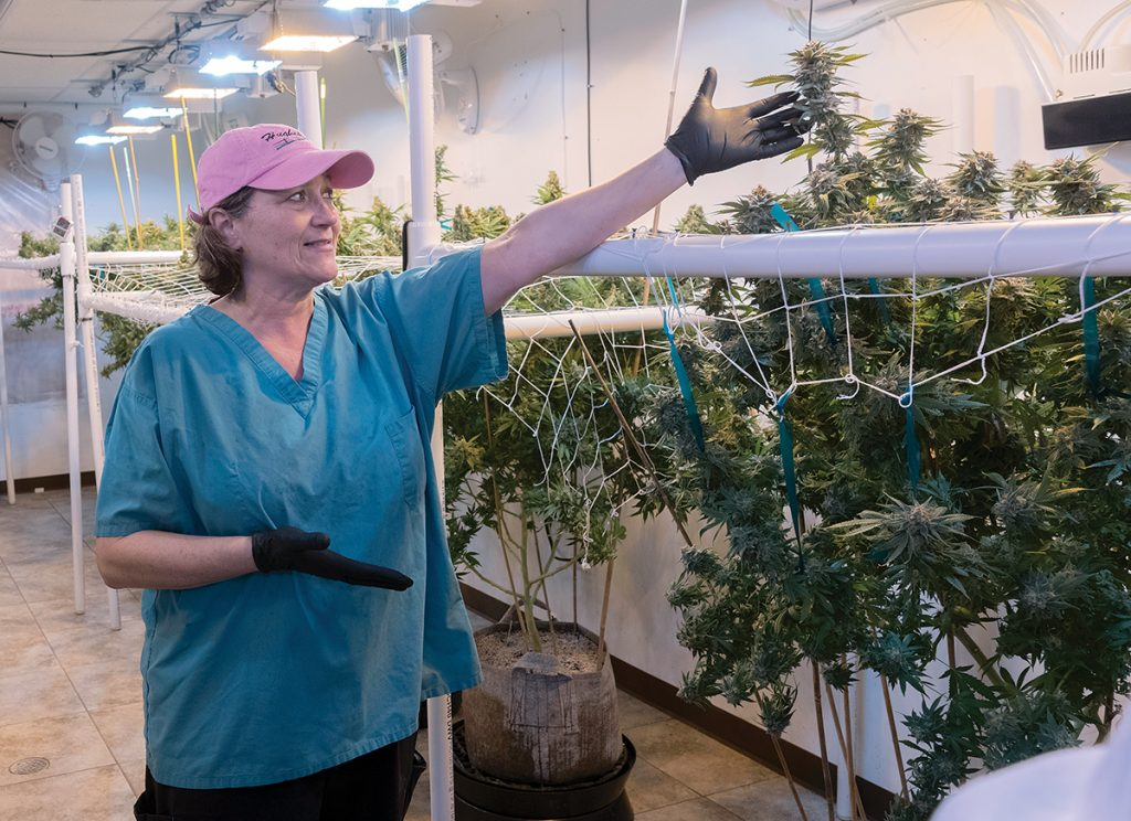 SHOWING OFF: Beth Charlebois, co-owner of Cultivating RI, a cultivation center located in West Warwick that grows marijuana for the state's medical-marijuana program, shows the various stages of growth. / PBN PHOTO/MICHAEL SALERNO