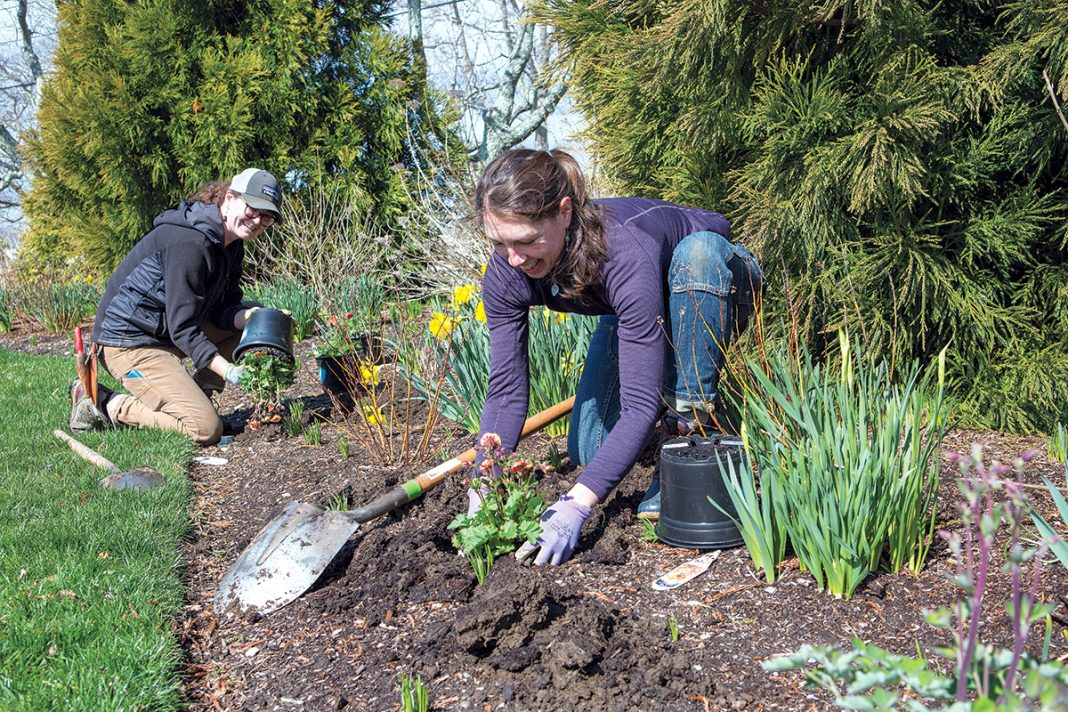 SKILLS BUILDER: Suzannah MacDonald, left, a fine gardener at Wild & Scenic in South Kingstown, jumped at the chance to participate in the Rhode Island Nursery and Landscape Association's apprenticeship program to hone her skills. MacDonald is working with Wild & Scenic owner Meg Gallagher.  / PBN PHOTO/KATE WHITNEY LUCEY