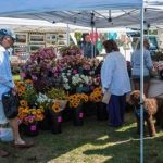 SHOPPERS BROWSE at the Fisherman's Memorial State Park Farmers Market in Narragansett. / COURTESY DEM