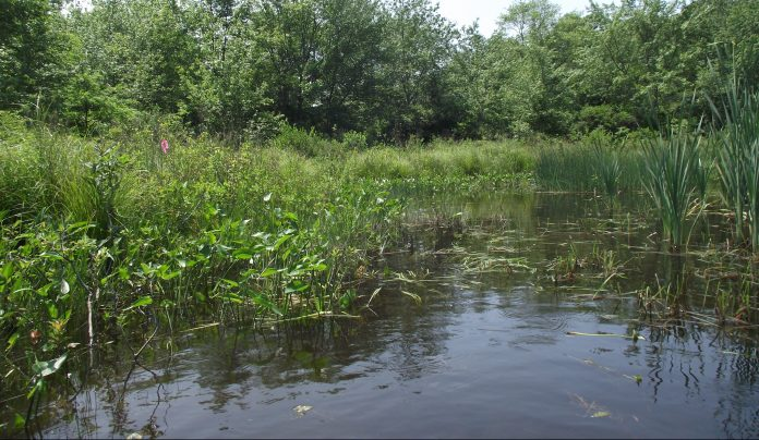 THE U.S. SENATE this week passed a bipartisan public-lands package, which includes language from Sen. Jack Reed, D-R.I., to designate river segments within the Wood-Pawcatuck watershed as part of the National Wild and Scenic Rivers System. Pictured is a section of the Pawcatuck River in Westerly. / COURTESY WOOD-PAWCATUCK WATERSHED ASSOCIATION
