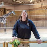 FEEDING TIME: Jennifer Warmbold, lead keeper of Africa at the Roger Williams Park Zoo, prepares to feed lettuce to some of the zoo's Masai giraffes. The zoo is in phase one of a three-phase, 20-year master plan to renovate and expand the Providence attraction.  