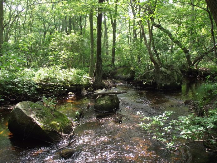 THE WOOD-PAWCATUCK WATERSHED Wild and Scenic River bill has been signed into law, designating river sections in the watershed as part of the National Wild and Scenic Rivers program. Above, the Beaver River. / COURTESY WOOD PAWCATUCK WATERSHED ASSOCIATION/ELISE TORELLO