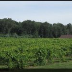 VERDE VINEYARD in Johnston will receive $20,000 from the Rhode Island Farm Energy Program to install a hybrid system of backup batteries for its solar and geothermal energy system to power critical winery operations during power outages. / COURTESY R.I. DEPARTMENT OF ENVIRONMENTAL MANAGEMENT