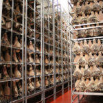 DANIELE HAS 600,000 legs of prosciutto dry-curing in its Burrillville production facilities. / COURTESY DANIELE