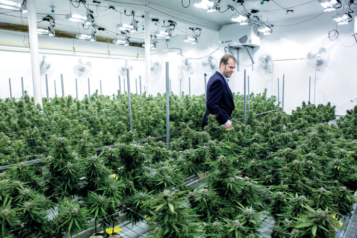 SETH BOCK, CEO of Greenleaf Compassionate Care Center in Portsmouth, one of three regulated marijuana dispensaries in the state, walks among marijuana plants at his Newport facility in 2018. / PBN FILE PHOTO/KATE WHITNEY LUCEY